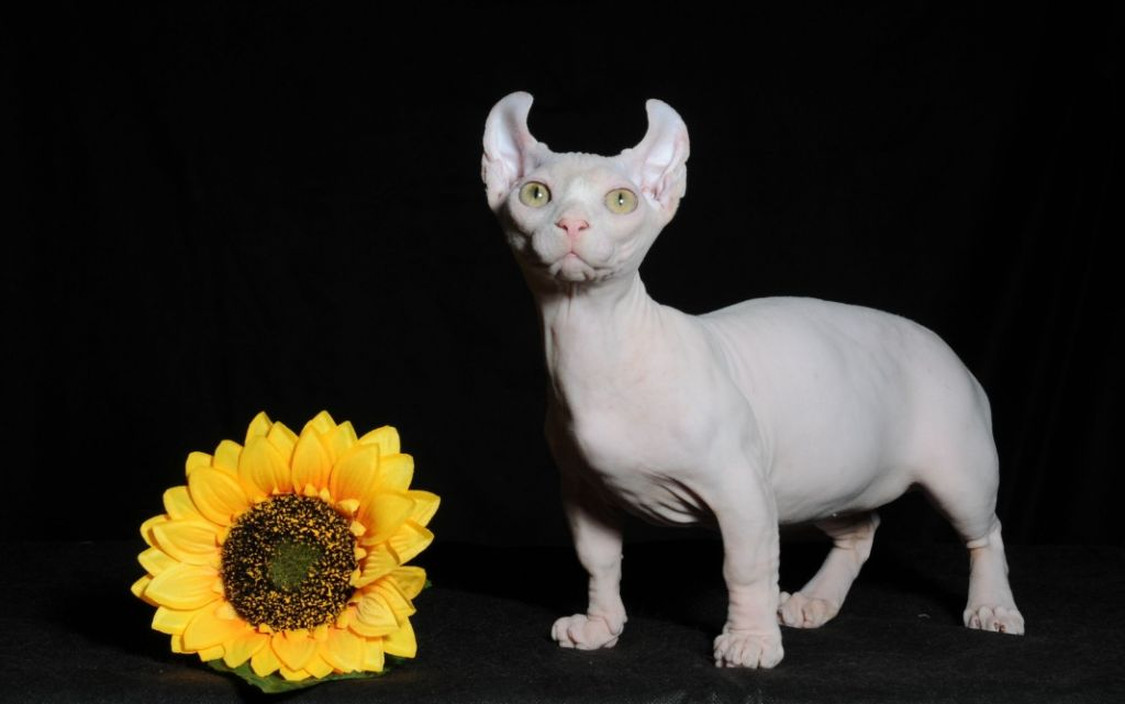 Фото котика двельф.jpg