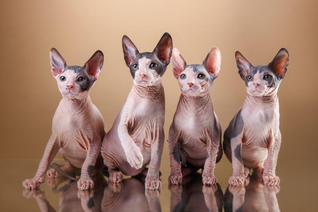Четыре донских сфинкса фото.jpg