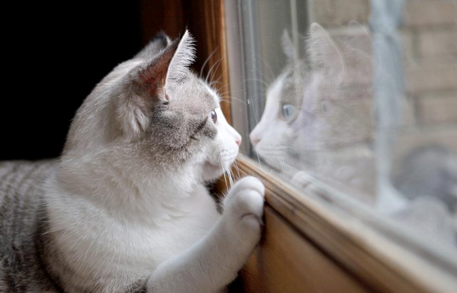 При любом виде чесотки кота необходимо изолировать от других животных