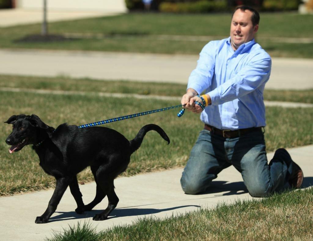 Во избежания нежелательной беременности лучше держать собаку на поводке
