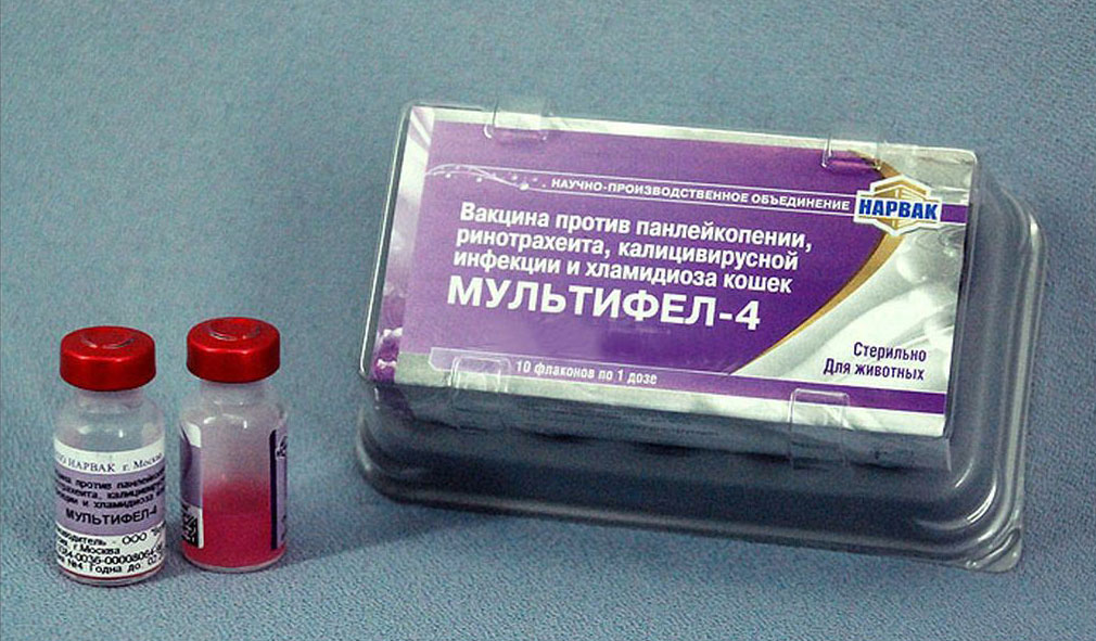 Срок годности приобретенной вакцины Мультифел-4 равен 12 месяцам от даты производства