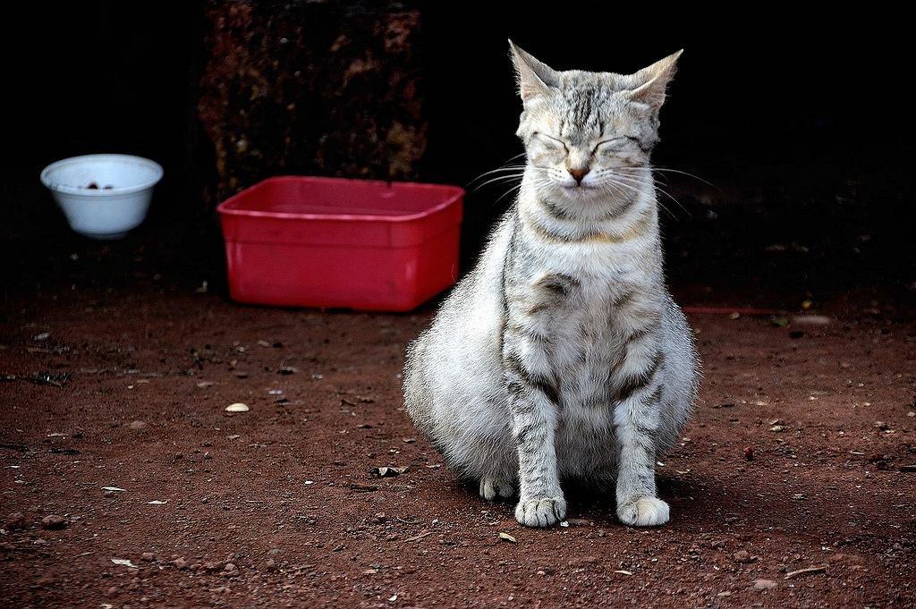 Фото беременной кошки