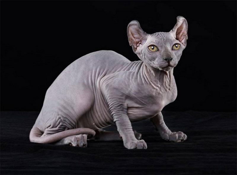 Кошечка эльф фото.jpg