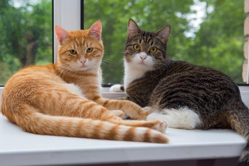 Если в доме несколько животных, то обработку необходимо проводить одновременно – это исключает распространение паразитов