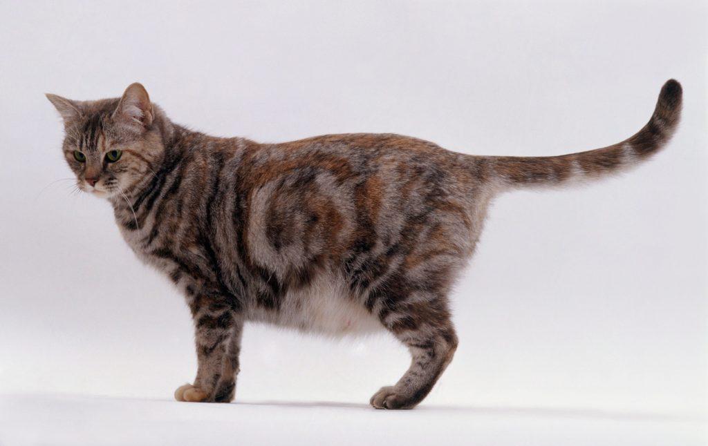 Длительность беременности кошки.jpg