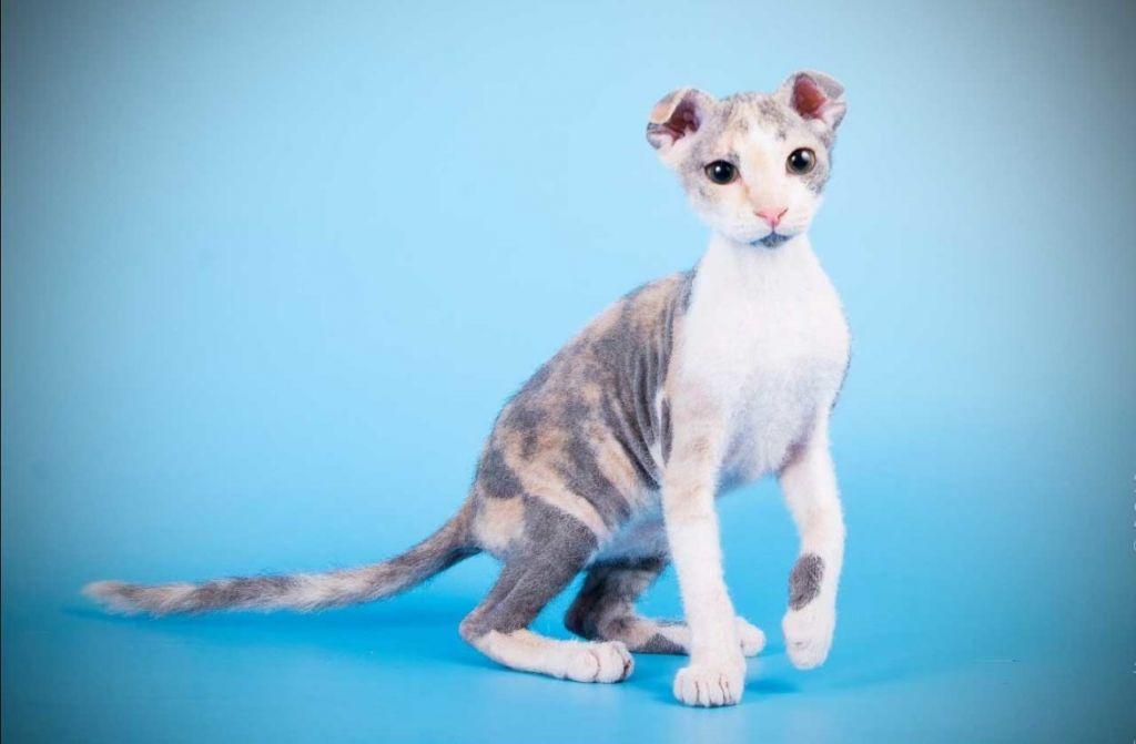 Красивая лысая кошка украинский левкой.jpg