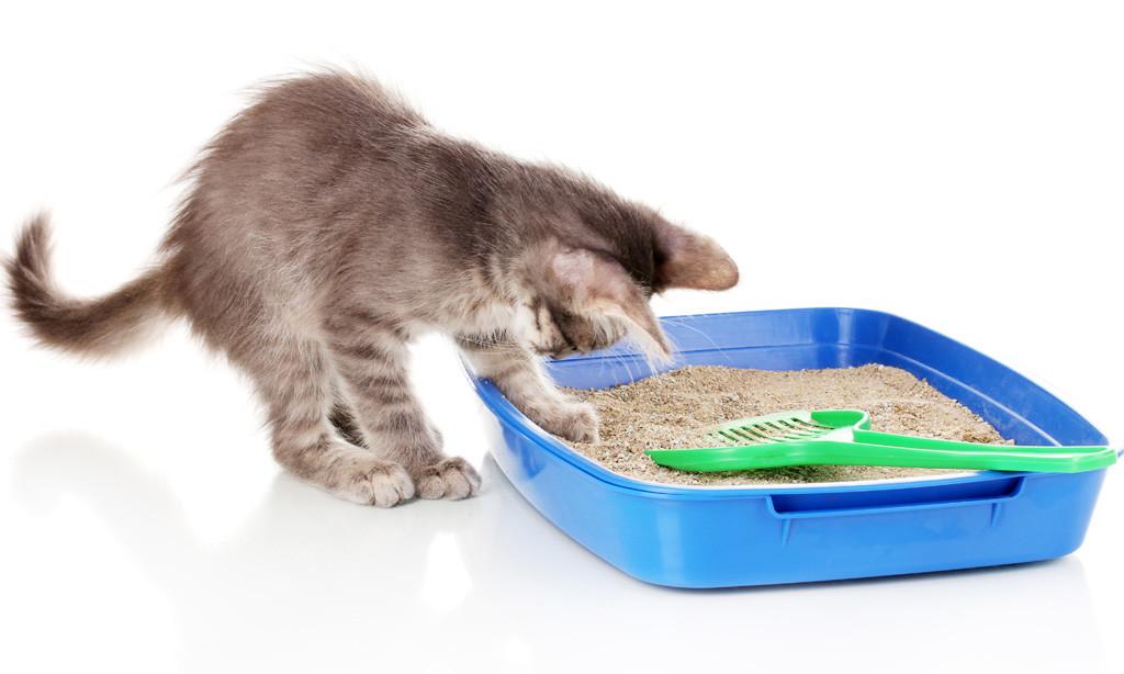 Котёнок и лоток.jpg